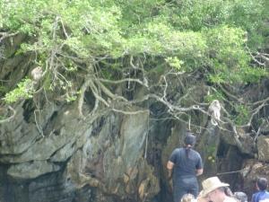 Nih, monkey b'gantungan di atas Pohon. untung gak jatoh - Monkey Beach